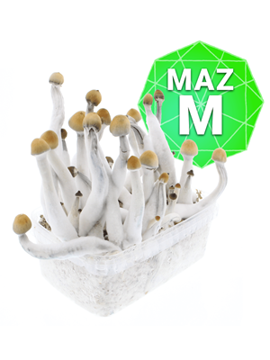 Mazatapec Kweekset- Medium
