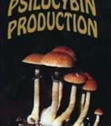 Psilocybin production