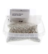 Seed Germination Kit, Lophophora williamsii